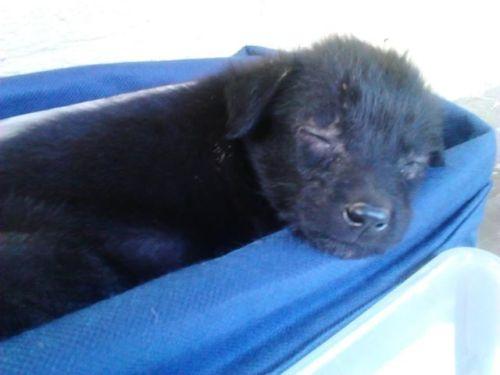 sleeping baby doggie