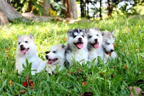 cuddly, cutie patootie huskies <3