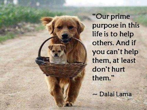 live with a purpose, never steal life from helpless, yet helpful and brave creatures.